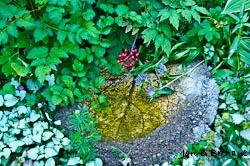 Leaf Bowl in a Calgary Garden - EHS