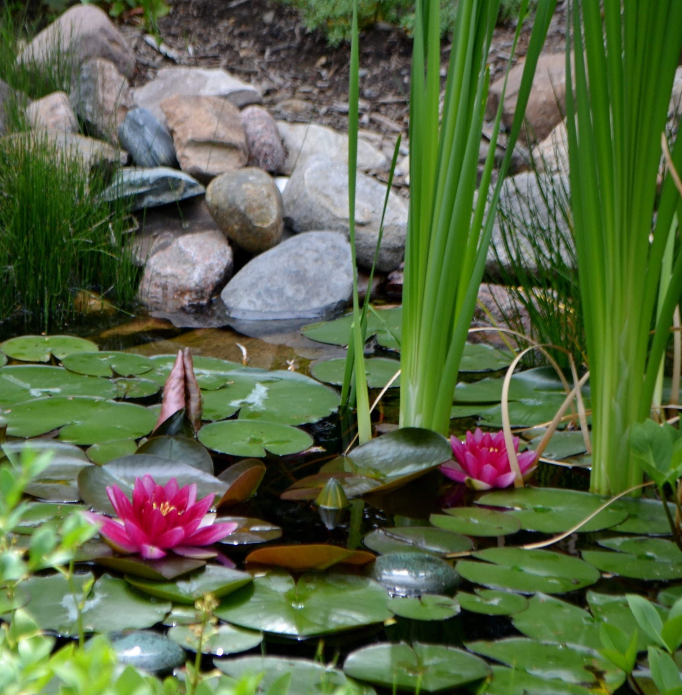 Each Yearu0027s Tour Is Self Guided. Your Ticket Will Include The Gardens,  Their Addresses With Driving Directions, And A Brief Description Of What  Makes Each ...