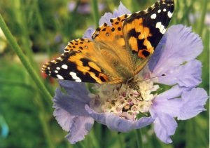 Speaker's Series - May 2018 - Insects in the yard & garden with Ken Fry @ Central Lions Recreation Centre | Edmonton | Alberta | Canada