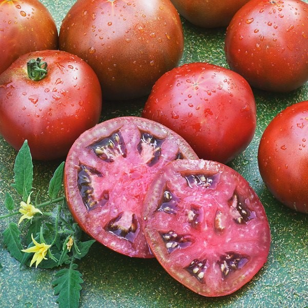 Black Prince heirloom tomato