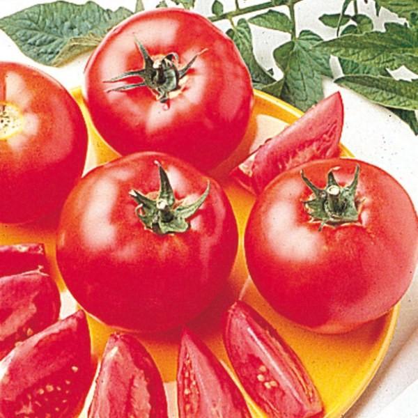 Bush Early Girl hybrid tomato