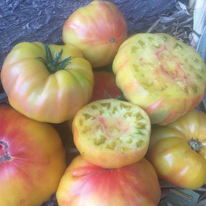Striped German Tomato